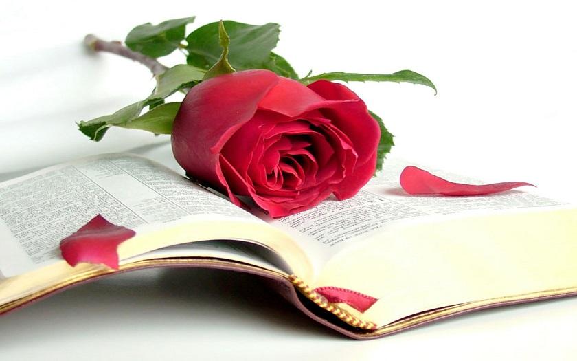 Các bước tìm hiểu một đoạn văn Kinh Thánh